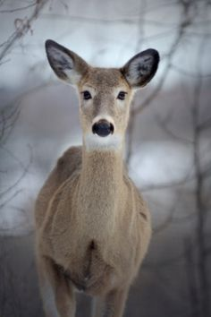 """Excerpts from """"Confessions of a Doe"""" by St. Justin Popovich ..."""