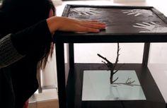 tree boxes Tree Box, Interactive Art, Art Installation, Boxes, Home Decor, Art Installations, Crates, Decoration Home, Room Decor