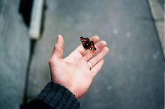 Borboleta na mão