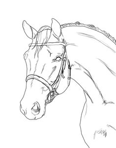 Horse Lineart With Bridle