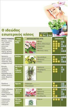 Φυτά που καθαρίζουν την ατμόσφαιρα