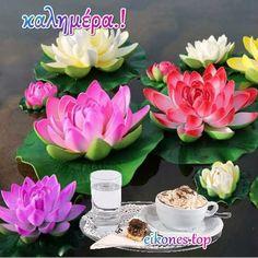 Όμορφες εικόνες τοπ για καλημέρα.! - eikones top Table Decorations, Plants, Home Decor, Homemade Home Decor, Flora, Plant, Decoration Home, Dinner Table Decorations, Planting