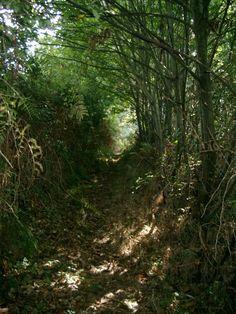 Bosque en Galicia