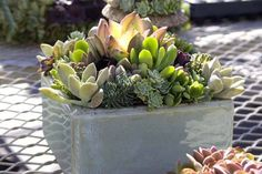 """succulent container - from """"Succulent Container Gardens"""" by Debra Lee Baldwin"""