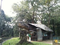 Turtle building in Periyar Tiger Reserve, Thekkady Wildlife Sanctuary, India.