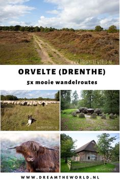 5 mooie #wandelroutes bij #Orvelte in #Drenthe. Te maken vanuit #landal #orveltermarke. Routes variërend van 2 kilometer tot LAW van 136 km. Ontmoetingen met #schapen #schotsehooglanders #reeën Photography Storytelling, West Coast Trail, Walking Routes, Day Trips, Netherlands, Holland, Beautiful Places, Wildlife, Hiking