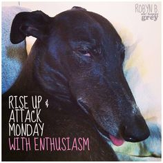 I had one lie this Shamus,He is missed Greyhound Art, Italian Greyhound, Dog Expressions, Paws And Claws, Lurcher, Lovely Creatures, Grey Hound Dog, Dog Boarding, Animal Quotes