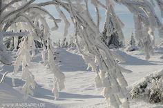 Frisch verschneiter Bergwald.