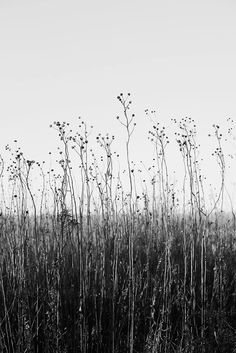 black and white photography Black Tree in Tall Grass: Black and White Landscape Photograph Keith Dotson Photography Black And White Picture Wall, Black And White Wallpaper, Black And White Pictures, Black And White Beach, Black And White Landscape, Black And White Aesthetic, Gray Aesthetic, Nature Aesthetic, White Aesthetic Photography