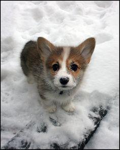 it's...it's in the snow... :D