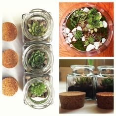 Plants in jars and bowls
