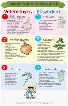 Requisites Of The Home Vegetable Garden Garden Soil, Garden Table, Herb Garden, Home Vegetable Garden, Home And Garden, Low Growing Shrubs, Amazing Gardens, Gardening Tips, Herbalism