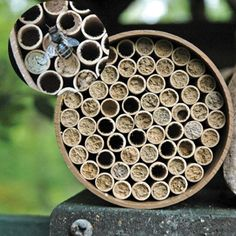 Mason Bee Kit 68 Tubes - Orchard Mason Bees - Beneficial Insects - Weed & Pest Control