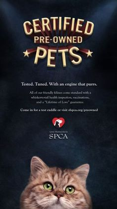 """LOOVE! """"Tested. Tuned. with an engine that purrs...."""" Beautiful!! #cats #kittens #sfspca #adoption #love #purrs"""
