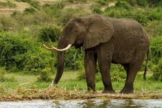 Wat zijn ze toch indrukwekkend... #photography #travelphotography #fotografie #canonnederland #canon_photos #panasonic #travelling #reizen #reisjournalist #travelwriter #fotoworkshop #willemlaros.nl #reisfotografie #tw #fb #compositie #natuurfotografie #nature #africa #uganda #fb #tw #fbp