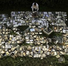 An Egyptian book restorer lays out burned and damaged books to dry in the garden of the Institut d'Egypte on Monday after a fire over the weeked nearly gutted the building and destroyed much of its contents.