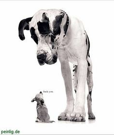 Große Hunde -Kleine Hunde!! (hunde, Hundeverhalten)