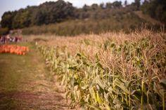 Field, farm, autumn and grass HD photo by Bonnie Kittle (@bonniekdesign) on Unsplash