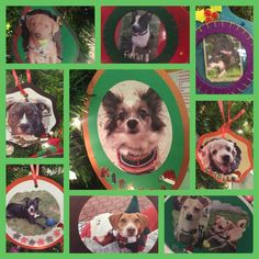 Our Christmas wish tree for foster dogs! Some have been in foster a long time. Please take some time to look at the back of the ornaments & donate a gift for a foster dog. People who foster pay for all food, treats, beds, etc. Let's help the giving hearts at Christmas time! #adoptdontshop #pawprintpantry #nianticct #eastlymect #fosterdogs #thankdogrescue #ctanimalhouse