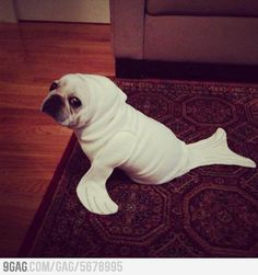 I'm a seal! This is tooooo cute!