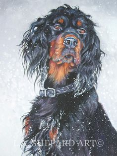 Gordon Setter art print of LA Shepard painting 8x10 Copyright text is for display purposes only and will not appear on your artwork About the Print: This open edition image measures 8x10 inches and is printed on 8.5x11 flat CANVAS sheet with archival inks. I use a specially designed