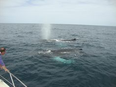 Whale Watching mit CaboKaiTours (Sal Rei, Kaapverdië) - Beoordelingen