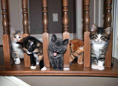 And if I were a cat, that'd be me...there in the center!