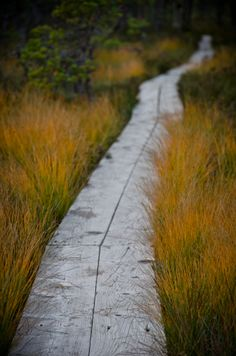 plank path | nature photography