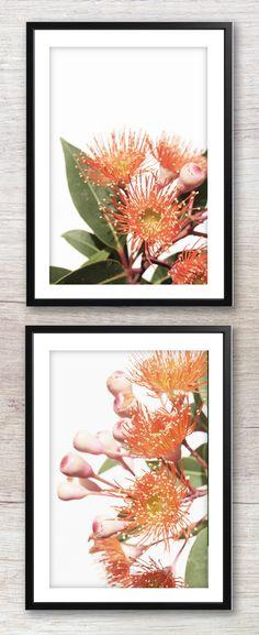Printable Native Australian Flower Home Decor Print Flower Prints, Flower Art, Flower Quotes Love, Australian Photography, Australian Native Flowers, Floral Printables, Floral Wall Art, Floral Photography, Digital Wall