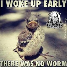 Early Bird gets the worm