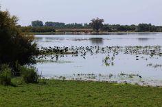 Parque Nacional de Doñana en Huelva. Visita mi página web para ver más fotos: https://unachicatrotamundos.wordpress.com/2016/07/31/parque-nacional-de-donana/