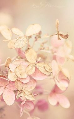 Delicate Pink and Gold