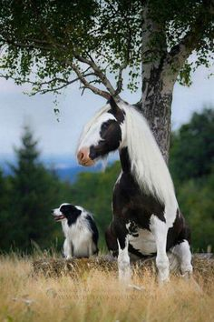 20 Animals That Are Complete Brothers From Other Mothers. A compilation of pictures of animals from different species that look too much alike Horses And Dogs, Cute Horses, Pretty Horses, Horse Love, Beautiful Horses, Animals Beautiful, Animals And Pets, Baby Animals, Dogs And Puppies