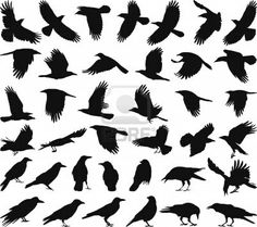 Illustration of black isolated vector silhouettes of carrion crow on the white background vector art, clipart and stock vectors. Silhouette Tattoos, Crow Silhouette, Silhouette Drawings, Crow Art, Raven Art, Itachi, Black Crow Tattoos, Black Bird Tattoo, Tattoo Bird