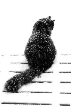 black cat in the snow