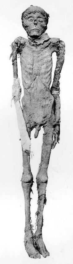 momia de Ahmosis
