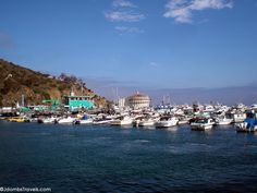 10 great things to do in Catalina Island >>> Have you been to Catalina? It's off the coast of California. I've always wanted to go there!