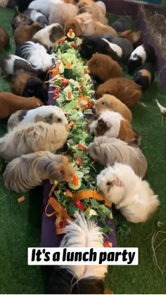 Cute Little Animals, Cute Funny Animals, Cute Dogs, Cute Animal Videos, Cute Animal Pictures, Pet Guinea Pigs, Guinea Pig House, Guinea Pig Cages, Tier Fotos