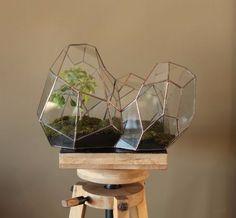Tradycyjne terrarium ewoluowało w wielościenne, miniaturowe szklarnie dla…