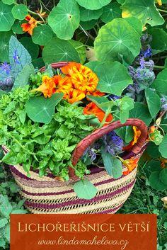 Kdybyste měli mít v truhlíku za oknem nebo na zahradě jen jednu kvetoucí bylinku, ať je to právě lichořeřišnice. Nádherná rostlina, která celé léto hýří barvami, je nenáročná na pěstování a má vynikající hojivé účinky.