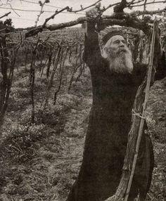 """Priest in the Vineyard"" Greece"