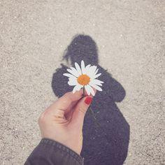 Hello monday  #hello #happymonday #sunny #happy #daisy #marguerite #shadow #printemps #igers #lifestyle #frenchblogger #paris