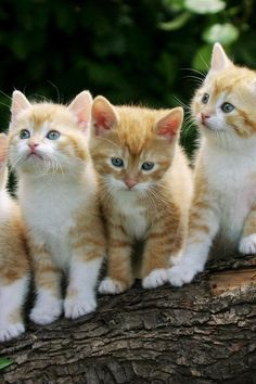 Aw so cute a family of baby cats :)
