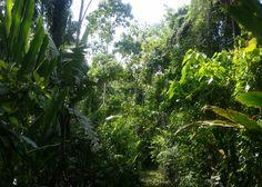 Objektbeschreibung:  Wunderschönes Dschungelgrundstück mit 45 ha, noch vollkommen unberührt in der Nähe von Hone Creek - auf der Karibikseite von Costa Rica.  Dieses Dschungelgrundstück ist ca. 6 Kilometer von Hone Creek einem kleinem Dorf entfernt und liegt in den Bergen, direkt hinter dem Dörfchen Hone Creek.