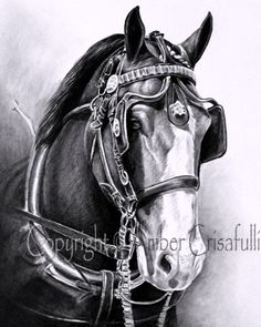 Clydesdale drawing by Amber Crisafulli
