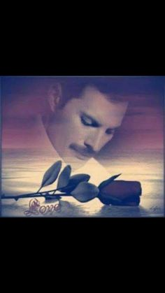 Can you name the car? Freddie Mercury Funeral, Freddie Mercury Quotes, Queen Freddie Mercury, Freddie Mercuri, Queens Wallpaper, A Kind Of Magic, Queen Pictures, Queen Love, Love Me Like