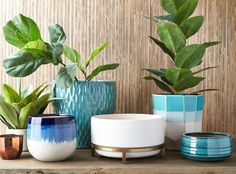 Make statement planters stand out with unexpected pops of turquoise.     Ceramic Planters  starting at  $9.99    compare at $20 & up   Styles may vary by store