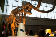Our mammoth makes an excellent wedding cake backdrop. Photo: Dawn McKinstry Photography