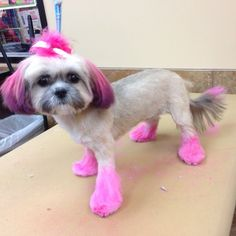 Petsmart Grooming Prices For Dogs