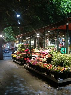 Flower stall outside the town hall near little Collins & Swanston streets. Melb. #Australia